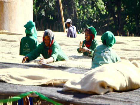Ethiopia Hambela Single Farm - Special Prep